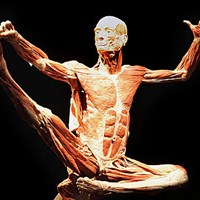 Body Worlds Exhibit in Times Square