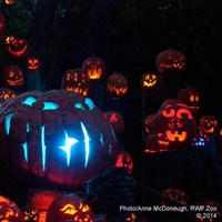 Jack O' Lantern Spectacular at Roger Williams Zoo
